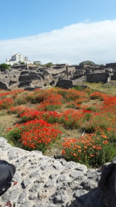 Poppies at Pompeii