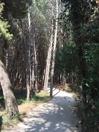 Paestum path 3