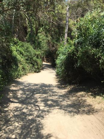 Paestum path 5